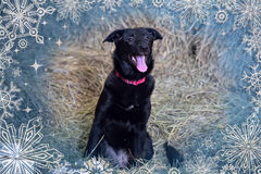 Black dog on winter background Royalty Free Stock Photos