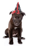 Black Dog with witch hat for halloween. isolated on white Royalty Free Stock Photo