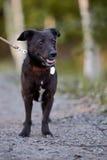 Black doggie. Stock Photo