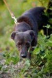 The black doggie Stock Photos