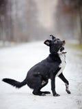 Black Doggie on walk. Stock Photos