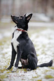 Black Doggie on walk. Stock Images