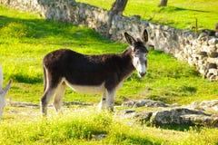 Black donkey at countryside Stock Photo