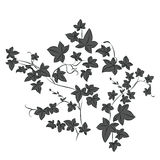 Black doodle ivy leaves Stock Photography