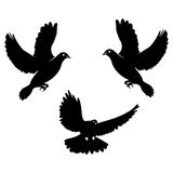 Black dove. Icon isolated on white. Stock Image