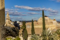 Black dove perched on the cornice of a tower of the Alcazar de los Reyes Cristianos with a blurred background. Wonderful sunny day in Cordoba Spain stock photo