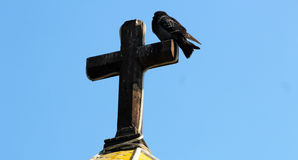 A black dove resting on a crux. This dove is resting in the morning outside from a church in mexico, above a stone crux Royalty Free Stock Images