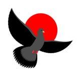 Black Dove symbol of sadness and mourning. Flying black Bird on Stock Photos