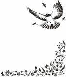 Black  dove. Black dove vector floral frame Royalty Free Stock Photos