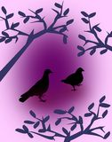 Black Doves Royalty Free Stock Photos