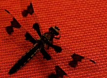 Black Dragonfly on Red Table. Close ups of a black dragonfly on a red table cloth, showing the intricate wings patterns. They are symbols of courage, strength stock photos