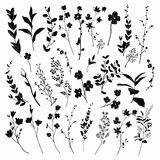 Black Drawn Herbs, Plants And Flowers. Vector Illustration Stock Images