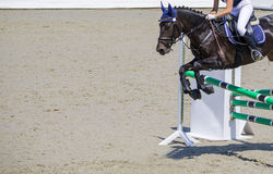Black dressage horse and girl in uniform performing jump at show jumping competition. Equestrian sport background. Crow black horse portrait during dressage Royalty Free Stock Image