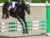 Black dressage horse and rider performing jump at show jumping competition. Equestrian sport background. Glossy black horse portrait during dressage competition Royalty Free Stock Images