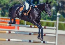 Black dressage horse and rider in white uniform performing jump at show jumping competition. Equestrian sport background. Stock Photos