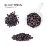 Black dry barberry spice Royalty Free Stock Image