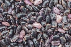 Black dry beans Stock Image