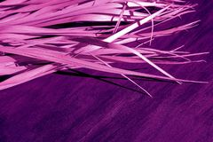 Black dry branch gray background palm tree canvas fabric proton purple pink violet magenta color. Dry purple branch on pink canvas background. Violet palm leaves royalty free stock image