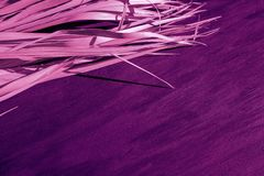 Black dry branch gray background palm tree canvas fabric proton purple pink violet magenta color. Dry purple branch on pink canvas background. Violet palm leaves stock photo