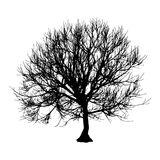 Black dry tree winter or autumn silhouette on white background.  illustration.  Royalty Free Stock Photography
