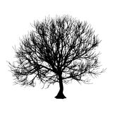 Black dry tree winter or autumn silhouette on white background.  illustration.  Stock Image