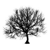 Black dry tree winter or autumn silhouette on white background.  illustration.  Stock Photos