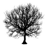 Black dry tree winter or autumn silhouette on white background.  illustration.  Royalty Free Stock Images