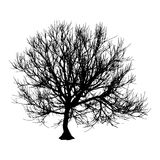 Black dry tree winter or autumn silhouette on white background.  illustration.  Stock Images