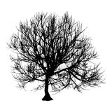 Black dry tree winter or autumn silhouette on white background.  illustration.  Royalty Free Stock Image