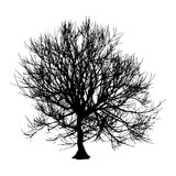 Black dry tree winter or autumn silhouette on white background.  illustration.  Royalty Free Stock Photos
