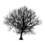 Black dry tree winter or autumn silhouette on white background. Vector eps10 illustration.  Stock Photo