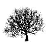 Black dry tree winter or autumn silhouette on white background. Vector eps10 illustration.  Royalty Free Stock Images