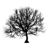 Black dry tree winter or autumn silhouette on white background. Vector eps10 illustration.  Royalty Free Stock Photos