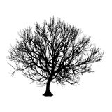 Black dry tree winter or autumn silhouette on white background. Vector eps10 illustration.  Stock Image