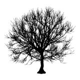 Black dry tree winter or autumn silhouette on white background. Vector eps10 illustration.  Royalty Free Stock Photography