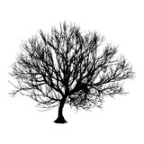 Black dry tree winter or autumn silhouette on white background. Vector eps10 illustration.  Stock Photos