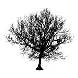 Black dry tree winter or autumn silhouette on white background. Vector eps10 illustration.  Royalty Free Stock Photo