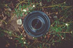 Black Dslr Camera Lens in Green Leaf Plant Royalty Free Stock Images