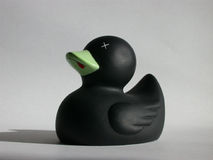 Black Duck. On White stock photos