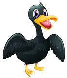 A  black duck Stock Images