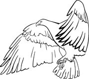 Black eagle Stock Photography
