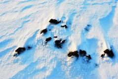 Black earth cowered with white snow, winter landscape detail, natural abstract background, close up stock photo