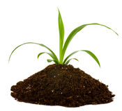 Black earth and green plant royalty free stock image