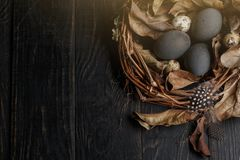 Black eggs in a nest of dry branches on a black board. Easter style stock images