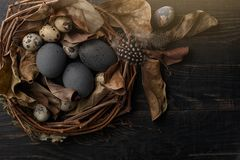 Black eggs in a nest of dry branches on a black board. Easter style royalty free stock photography