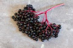 Black elderberries, Sambucus nigra, corymb on slate. Copy space, close-up Stock Image