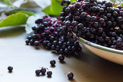 Black elderberries, Sambucus nigra, in enamel bowl. Copy space Stock Photo