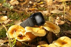 Gadget in nature royalty free stock photography