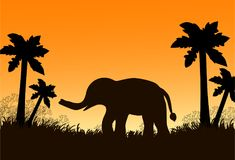 The black elephant on the grass and palm trees, sunset. Vector i. Llustration Royalty Free Stock Photo