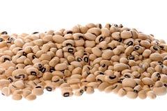 Black Eye Beans. Isolated image of black eye beans royalty free stock photography